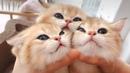 СУПЕР подборка смешных животных 13 ржач гарантирован Приколы с забавными животными