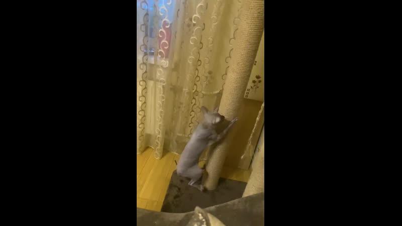 09 01 2021 Видео Наталья Громова