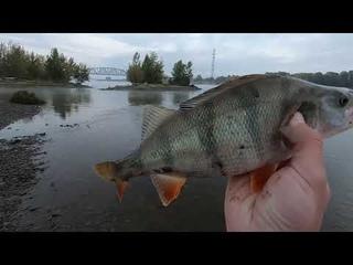 Рыбалка на Оби в сентябре, крупный окунь на поппер