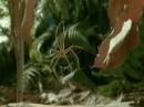 Паук-гладиатор охотится на сверчка
