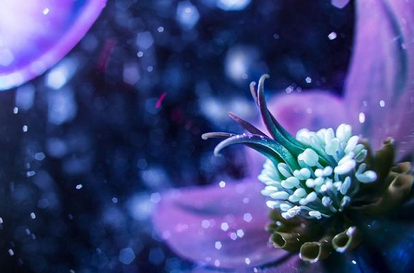 Фотограф Дон Комаречка из Канады снимает цветы под специальным ультрафиолетовым освещением, которое позволяет добиться такого интересного эффекта