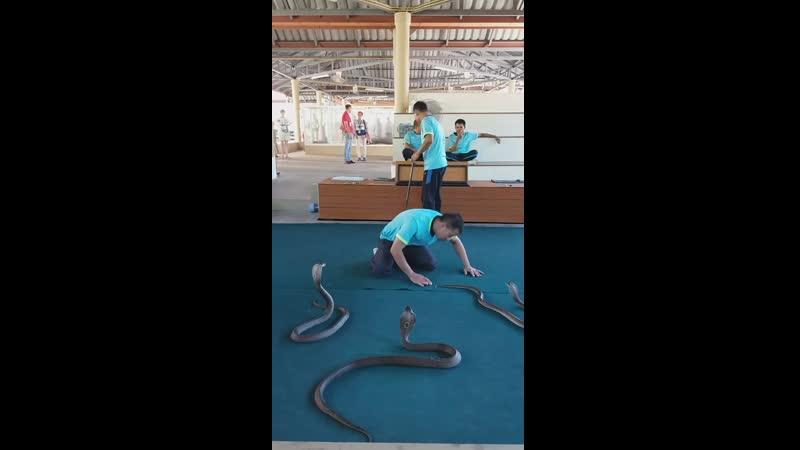 Шоу со змеями Тайланд 2019