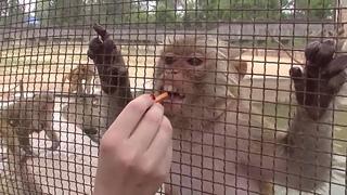 Кормлю обезьянок.
