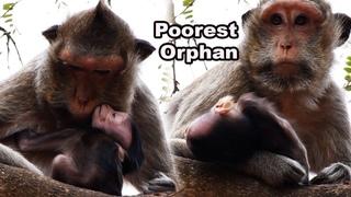 Orphaned Baby Monkey 2020 - Million Sad Mom Tayla Takes Care Of Baby Taylor But No Milk