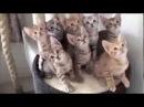 КОТЭ ДИСКОТЕКА Лучшие Видео Приколы с Кошками Прикольные Видео