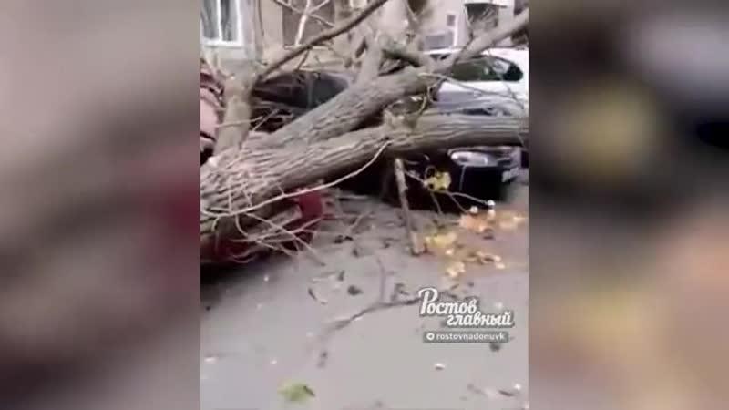 В Азове сильный ветер повалил дерево В станице Багаевской дерево упало на машину