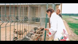 Четвероногие и брошенные: как живут бездомные животные на Белгородчине?