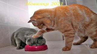 😺 Подборка приколов с котами и кошками!😺Мега смешные кошки!😺