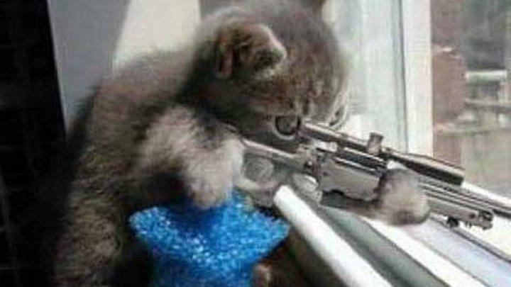 ЛУЧШИЕ ПРИКОЛЫ с котами Самые смешные видео про кошки и коты Подборка приколов на канале ПРИКОЛЫ ТВ