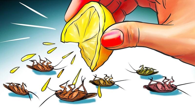 12 натуральных способов навсегда избавиться от тараканов