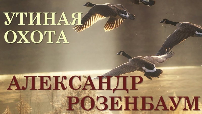 Александр Розенбаум Утиная охота