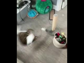 Как отучить кота прыгать на аквариум