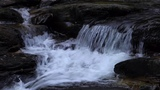 Waterfall &amp Forest Sounds-Birds Singing-Relaxing Sound of Water-Nature's Music-Soothing Sleep