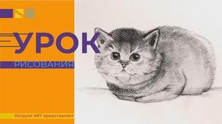 Как нарисовать кота поэтапно карандашом просто! Урок рисования для детей и взрослых.