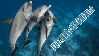 Говорят дельфины говорят: клип на песню из мультфильма Девочка и Дельфин | Dolphins in wildlife