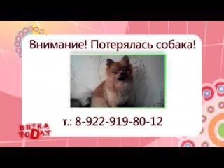 Потерялась собака. Вятка Today