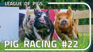 League of Pigs - Season 6 - Round 2!