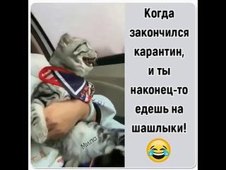 Когда закончился карантин, и ты наконец-то едешь на шашлыки)))