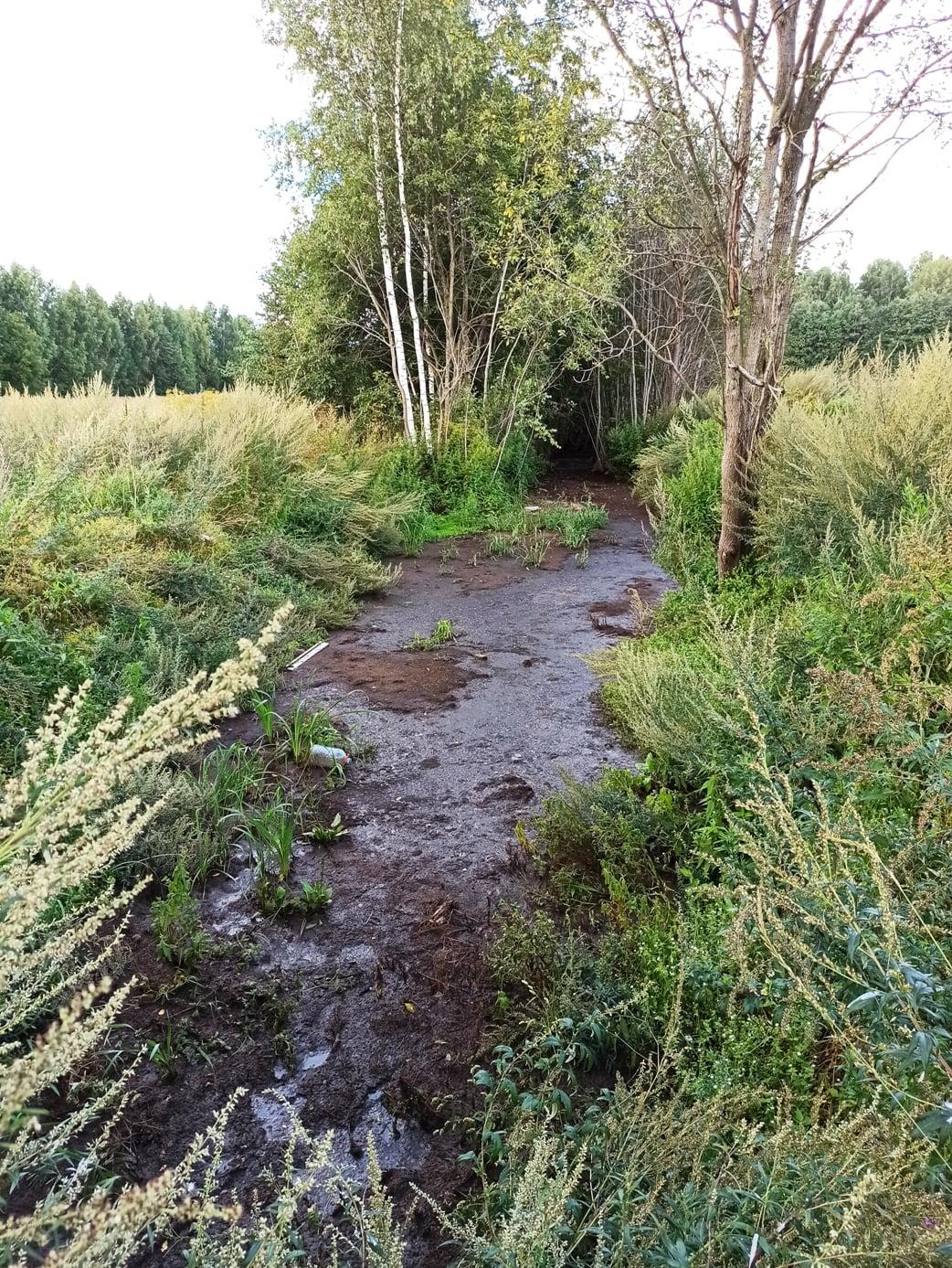 Реку Куновка в Талдомском округе предлагают включить в региональную программу реабилитации