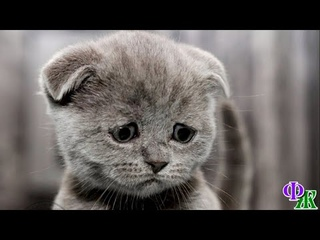 Котенок не сомневался, что его сейчас выкинут назад на улицу, и даже был готов к этому, но…