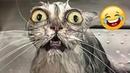ПРИКОЛЫ С ЖИВОТНЫМИ СМЕШНЫЕ ЖИВОТНЫЕ - Funniest Animals - Best Of The 2021 Funny Animal Videos