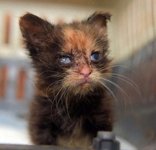 Инфекции кошек, изображение №2