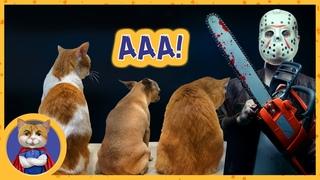 День стрижки когтей. Все в шоке ! Как подстричь когти коту или собаке и остаться в живых
