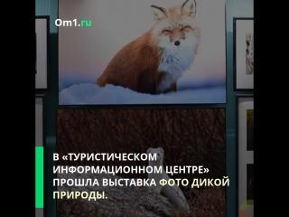 Туристический флешмоб в Омске