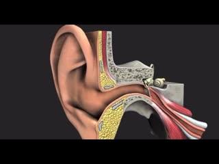Существует два вида серы в человеческих ушах: сухая и мокрая