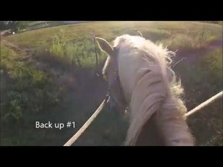 Second ride with Gracie Mae the Belgian Draft Mare