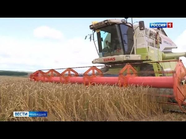 В Чувашии валовой сбор зерна на треть превысил прошлогодние показатели