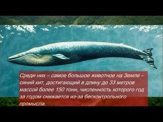 Познавательная онлайн-программа: «Животные Красной книги»