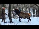 18 Охота и Рыбалка с Юмором Приколы на охоте и рыбалке