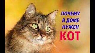 19 причин почему нужен кот в доме