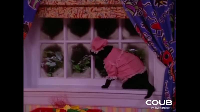 Сабрина маленькая ведьма Все моменты с котом селем часть 3