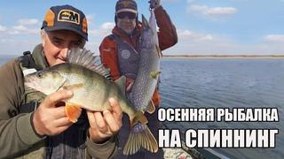 Рыбалка осенью 2020. Трофейная щука на спиннинг. Крупный горбач и злой судак.