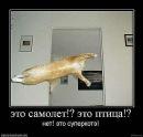 Чибалин Дима   Миргород   27