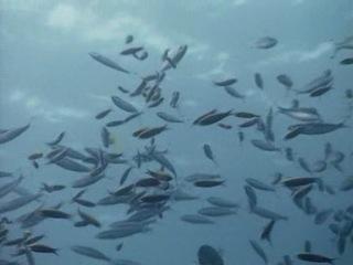 BBC: Прогулки под водой: Австралия, Большой барьерный риф