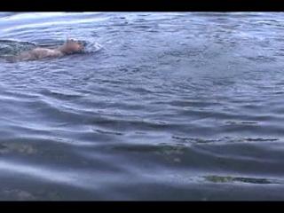 купание голышом
