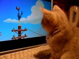 Как котёнок смотрит мультик