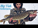 Рыбалка на прудовую щуку зимой жерлицы балансир мормышка
