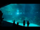 Resorts World S E A Aquarium The Worlds Largest Aquarium
