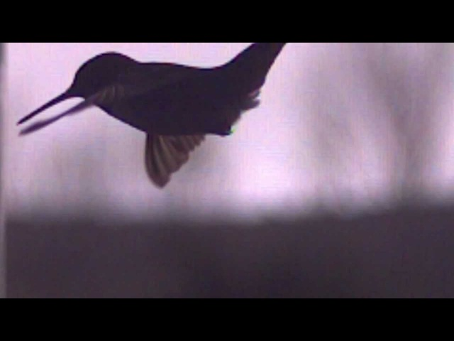 Boards of Canada - Slow This Bird Down