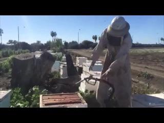 Пчелинный танец (6 sec)