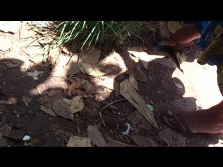 Sri lankan feet