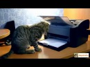 короткие приколы с животными!! уморные кошки