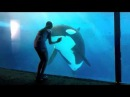 Ava Allan Shamu for new One Ocean Show at Sea World