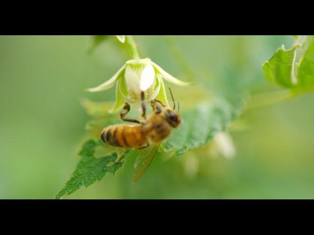 Пчёлки за работой