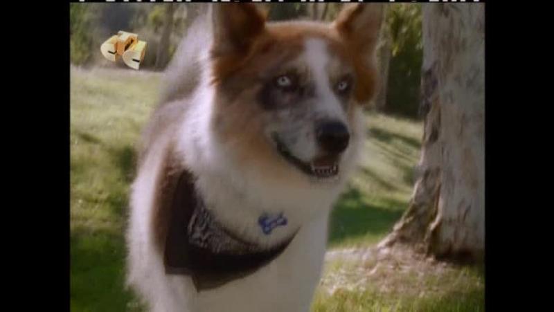 Видео 100 подвигов Эдди Макдауда 100 Deeds for Eddie McDowd (1999 - 2002)(США,Канада) смотреть онлайн