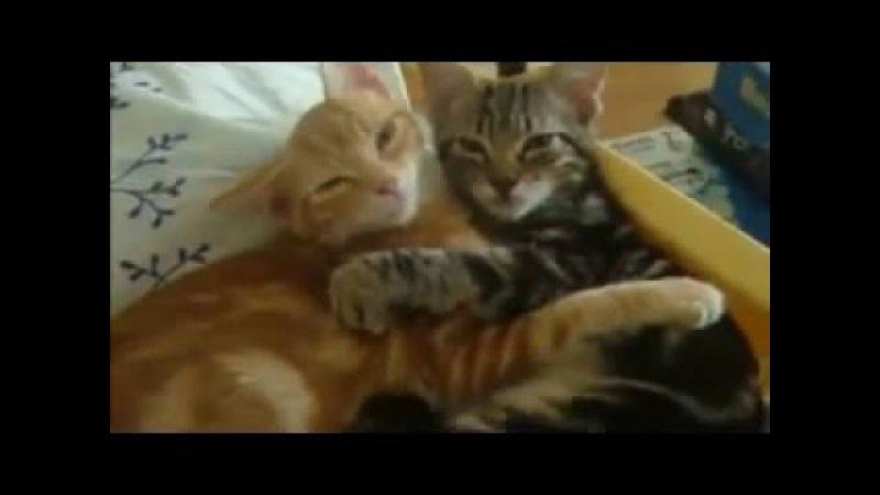 Candan Erçetin - Kedi Özledi